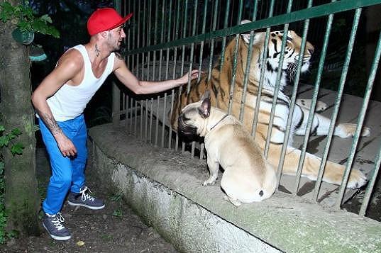 Psíka ale tygr dlouho nebavil.