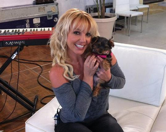 Britney Spears se psím miláčkem