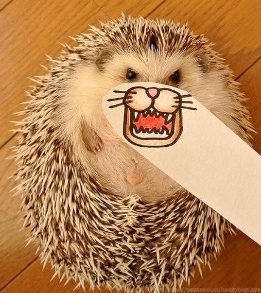 Tohle je nejslavnější ježek na světě.