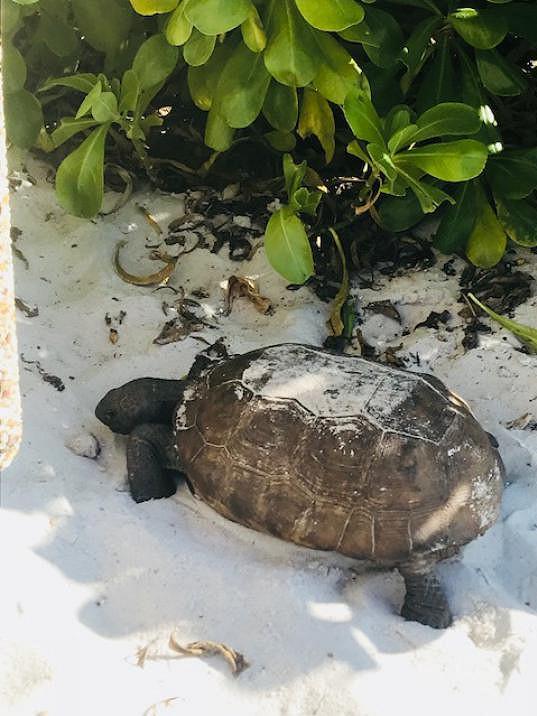 Na pláži potkala i želvy.