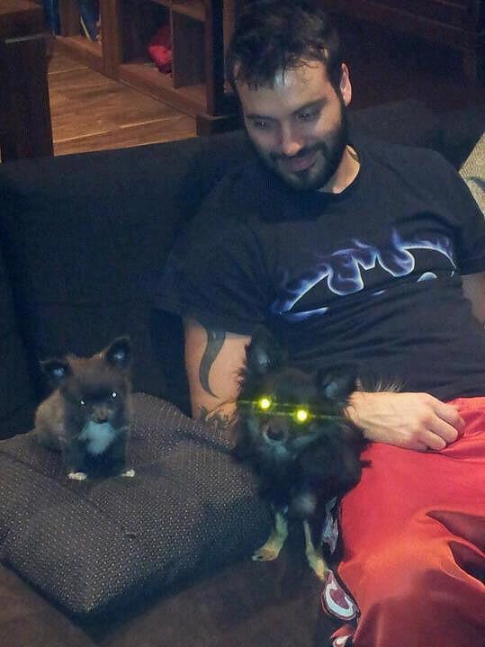 Vašek Noid Bárta se zamiloval do malých psíků.