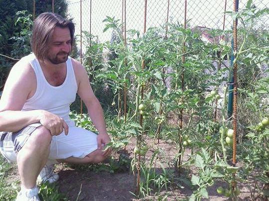 Výtěžek může věnovat na nové sazenice rajčat.