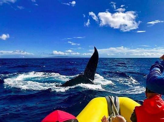 Největším zážitkem byla zatím plavba za velrybami.