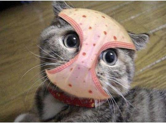 Takhle prý vypadá Ivetin proslavený kocour Ťupík.