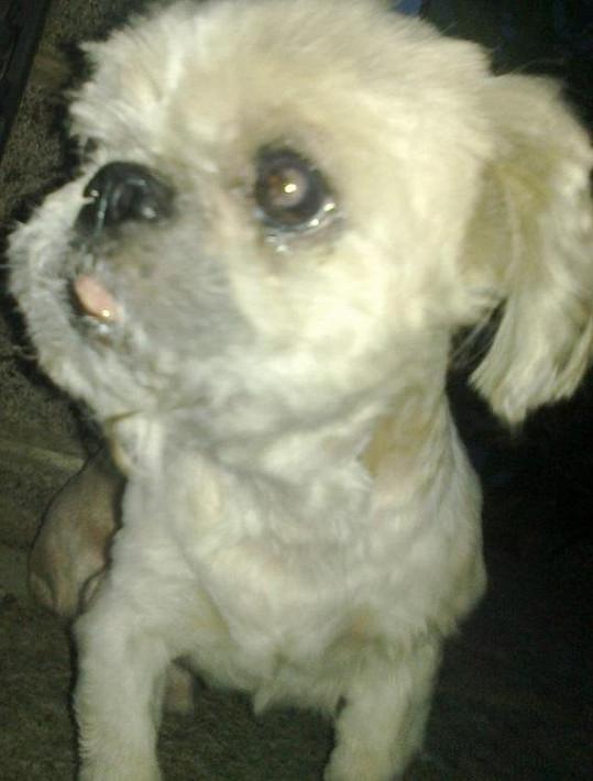 Pes Josefa Rychtáře Max má viditelný nádor u pravé spodní čelisti.