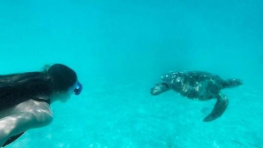 Setkání s mořskou želvou