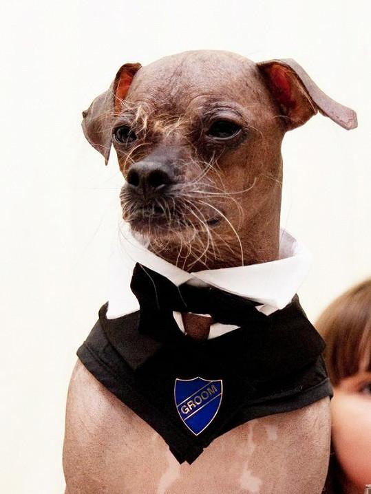 Oficiálně nejošklivější britský pes roku 2005 jako ženich.