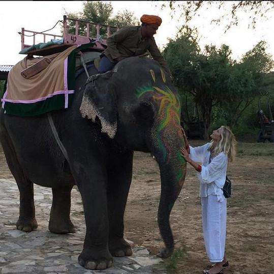 """Indického slona popsala Maxová slovy """"jemný obr""""."""