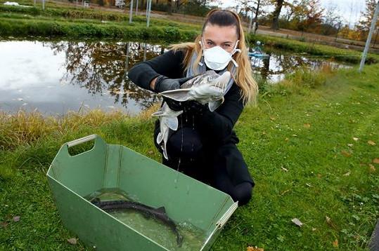 Vyrábí z nich kaviár a díky speciální metodě už nemusí tyto ryby zabíjet.