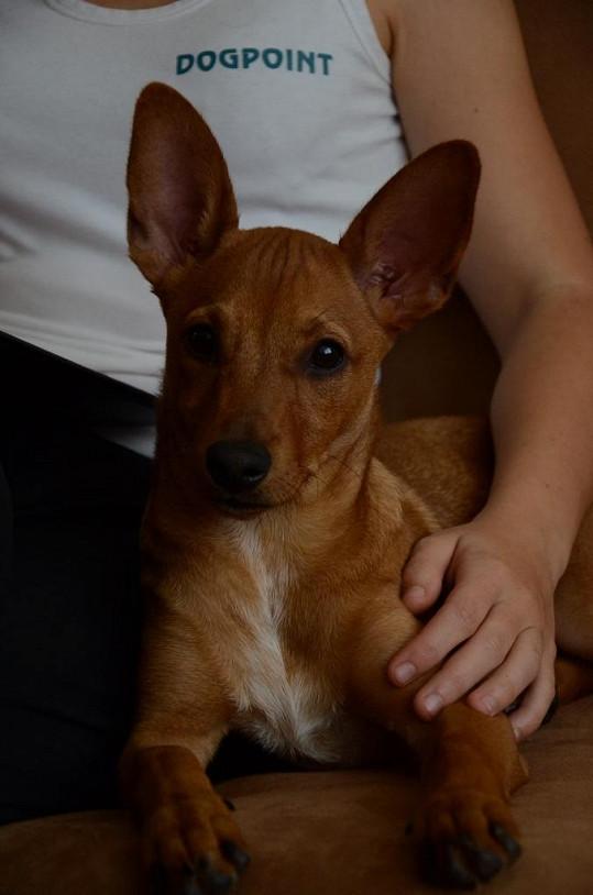 Tahle psí slečna teď patří Sandře Novákové.