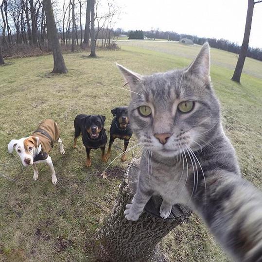 Tahle kočka je ve focení selfíček profík!