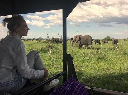 Plodková mezi oblíbenými zvířaty, kterými jsou sloni.