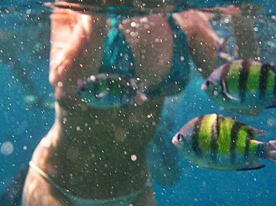 Lov ryb