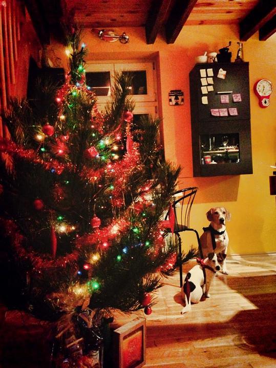 Pod vánočním stromkem na své dárky čekali i jejich dva psi.