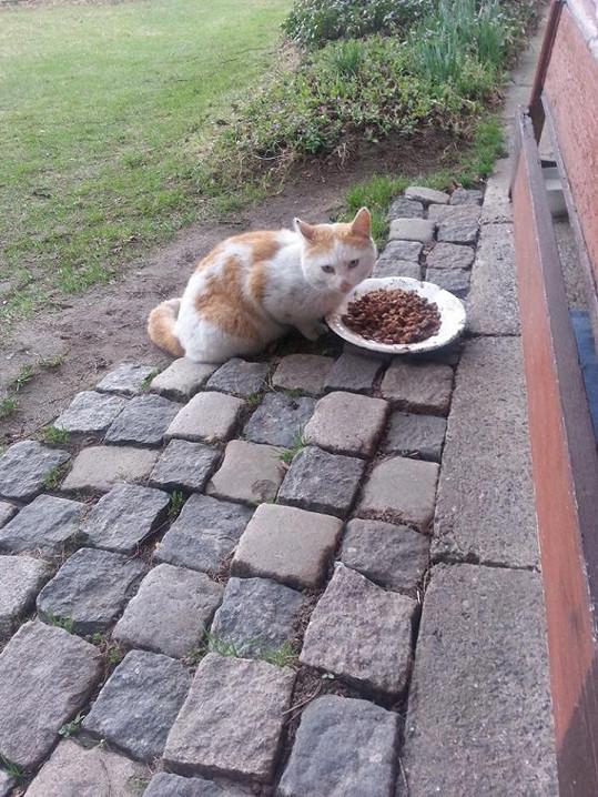 Na svoji plnou misku čekají i kočičky v Jizerských horách.