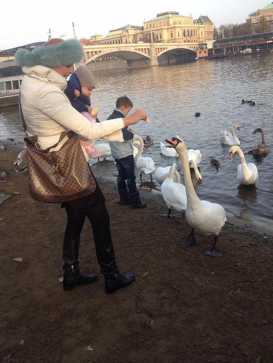 Quentin krmil s maminkou labutě.