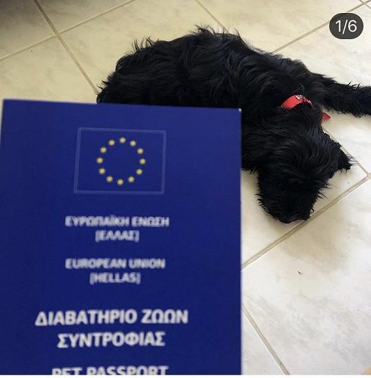 Na veterině v Řecku vyřídila všechny potřebné papíry.