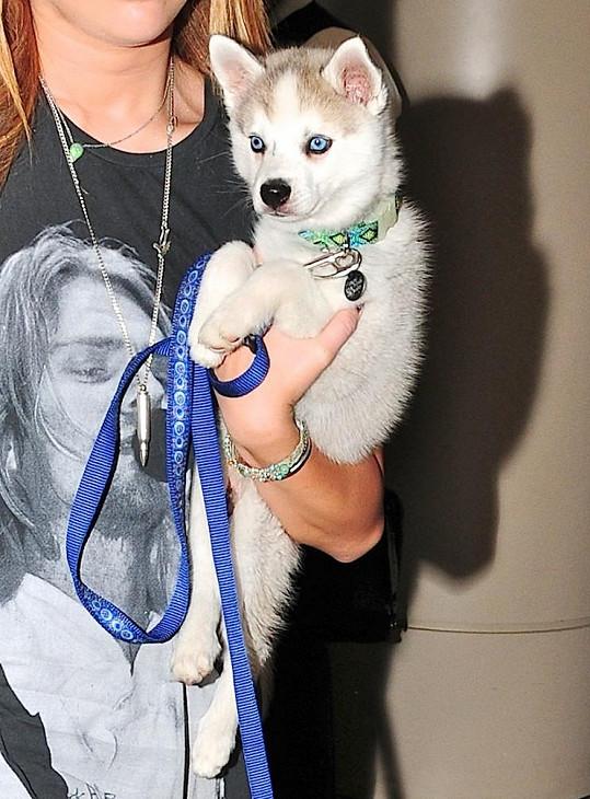 Hereččin psík Floyd vypadal jako štěně jako plyšová hračka.
