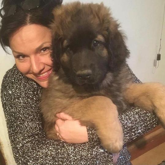 Šárka miluje psí plemeno leonbergera.