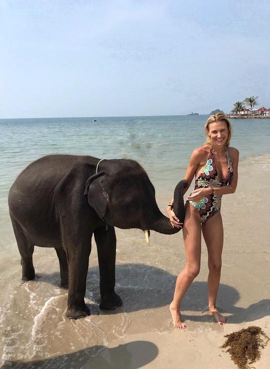 A na setkání se slony opravdu došlo.
