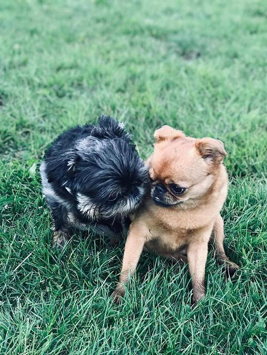 Doma už má Miloš dva psíky.