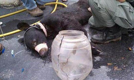 Vyhublý medvídek se teď konečně nají.