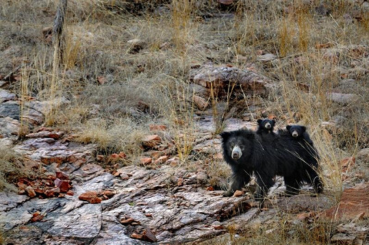 Tato dvě roztomilá mláďátka nebojácná medvědice ubránila před jistou smrtí.