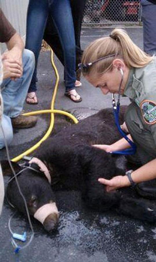Ochránci přírody pomáhají pohublému medvídkovi.