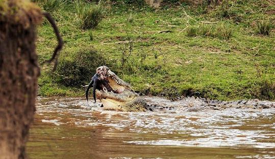Ze snímků pořízených v keňské národní rezervaci Masai Mara mrazí.