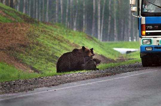 Medvědi společně čekají, až někdo zastaví.