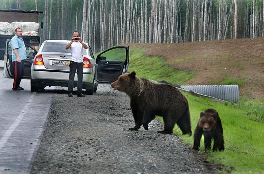 Medvědí rodinka se lidí nebojí.