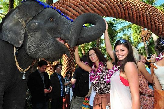 Žádná z dívek si nenechala ujít příležitost sáhnout si na slona.