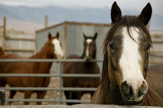 V ceně je zahrnut i ranč s koňmi.