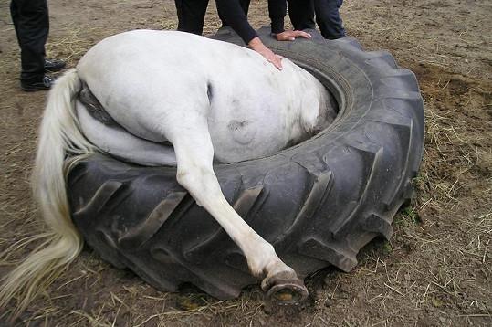 Malý pony v pneumatice od traktoru.