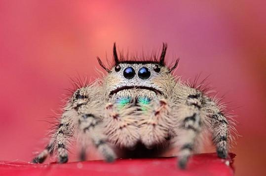 I pavouk může být krásný.