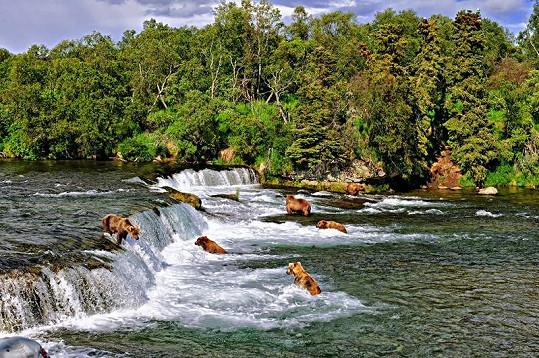 Řeka Brooks je vyhledávaným medvědím lovištěm.