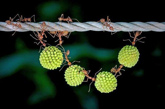 Tohle v mraveništi neuvidíte...