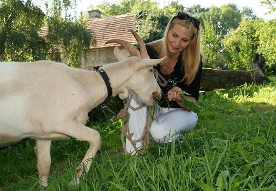 Když dostala koza hlad, Ivana si bez zaváhání poradila.