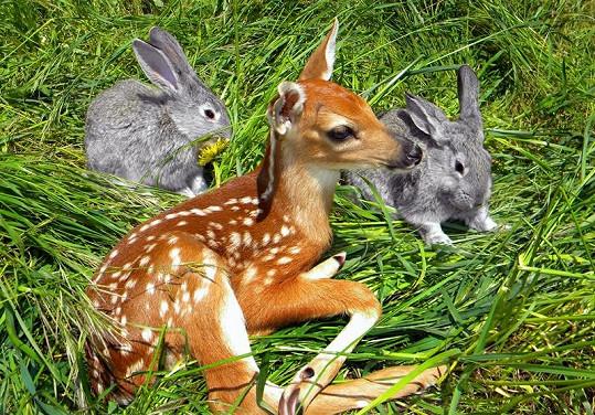 Bambi s kamarády.