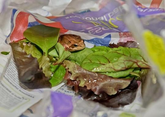 Malá žabička nebyla v salátu téměř vidět.