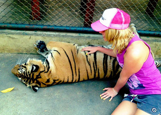 Nikol Moravcová a nebezpečný tygr.