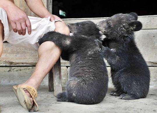 Medvídci mají svého zachránce rádi.
