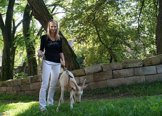 Ivana vyrazila na procházku s místní kozou.
