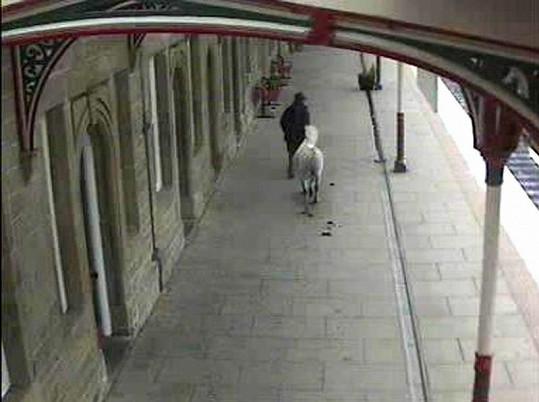 Záhadný muž jde se svým koněm po nástupišti.