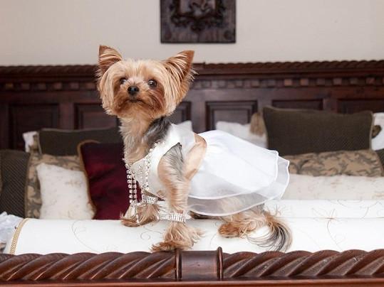 Načinčaná psí nevěsta Lola.