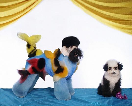Psi jako panda a rybičky.