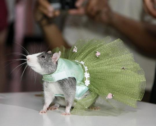 Krysa v zelených šatech.