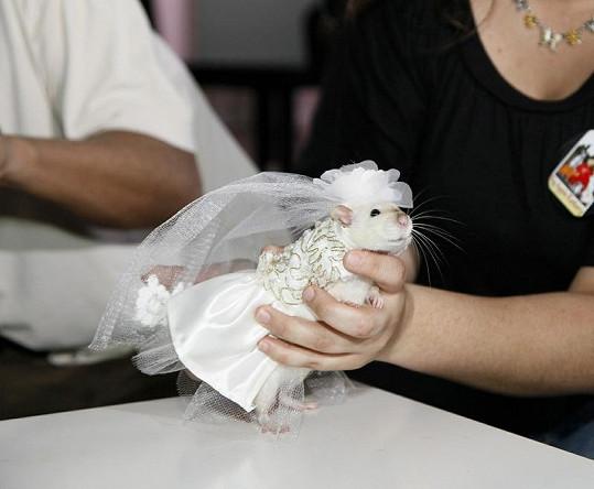 Domácí mazlíček ve svatebním.