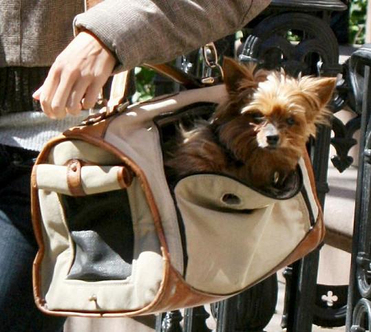Smrt psa modelka přirovnává ke smrti blízké osoby.
