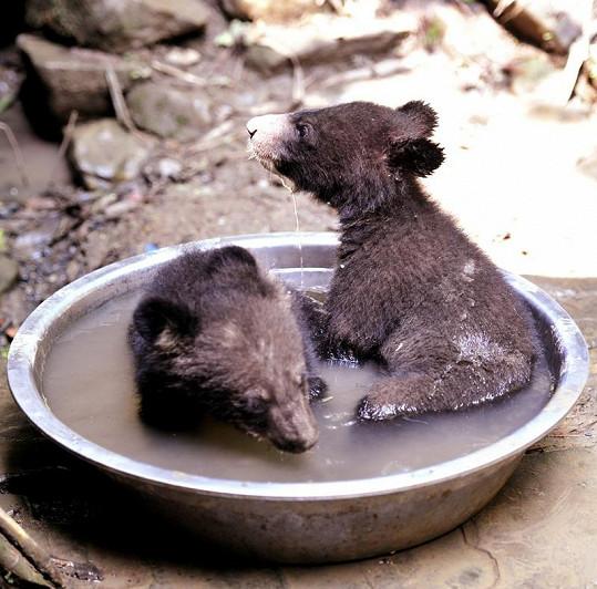 Medvědi musí u Tiana dbát na čistotu.